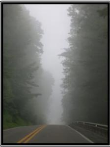 Framed Foggy Road