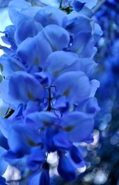 most beautiful blue