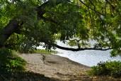 small beach glimpse