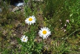 each daisy each blade of grass