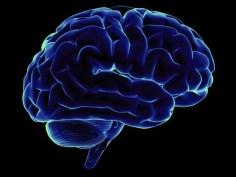 """""""ثنايا"""" الدماغ: حل اللغز؟"""