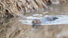 خمسة كائنات حية تهدد النظام البيئي في أوروبا