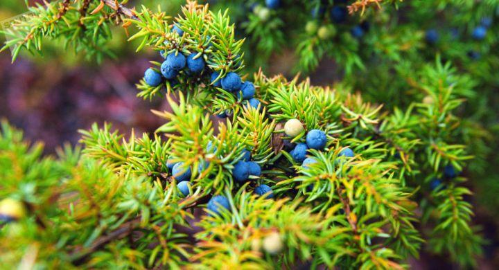 العلماء يطورون فياغرا للنبات