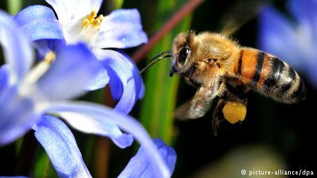 البيئة – النحل أكثر الحشرات نفعاً
