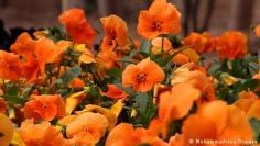 كيف تهتم بنباتاتك عندما تتعدى درجات الحرارة عتبة الـ 30 ؟