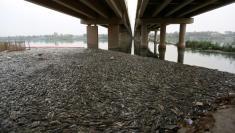 الصحة العالمية: بكتيريا معوية وراء نفوق الأسماك بنهر الفرات