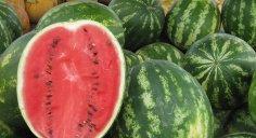 يحمي القلب والمناعة ويحارب الشيخوخة…5 فوائد لبذور البطيخ