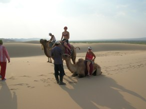 """""""These are Bactrian camels from Asia. Asian camels are a lot rarer than the one-humpers that come from the Middle East Ammon explained. - Sand Dunes"""