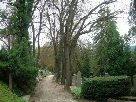 Sighisoara grave yard