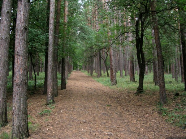 Forests of Sofia, Bulgaria