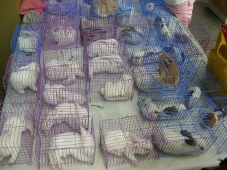 This place is crazy because they sell baby bunnies and puppies on the side of the road. I was so tempted. The rabbits only $3.00