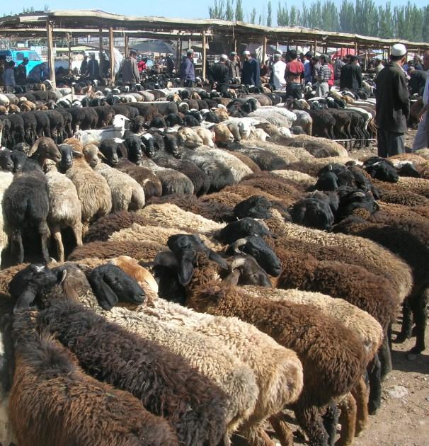 Animal market day in Kashgar, China