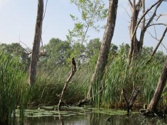 Suriname jungle river