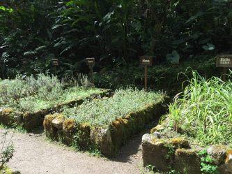 tea plantation,Inkaterra Machu Picchu Puerblo Hotel, Peru
