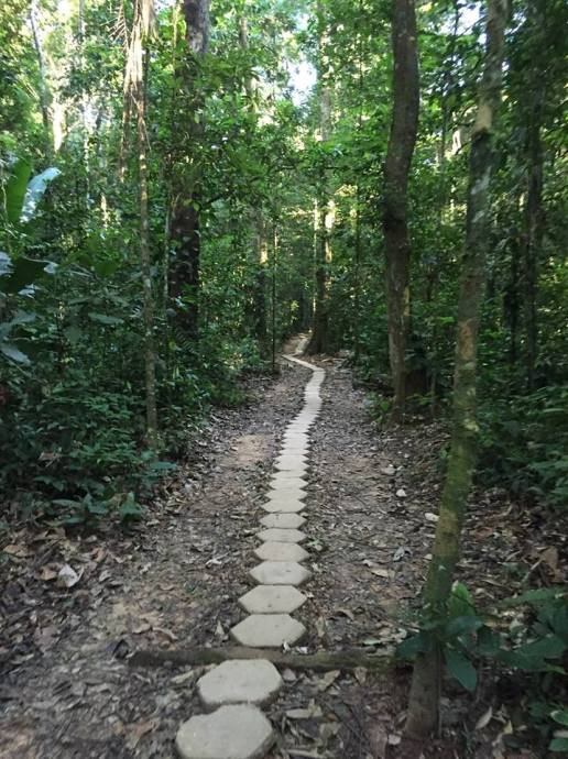 walkway to Refugio lodge, Peru