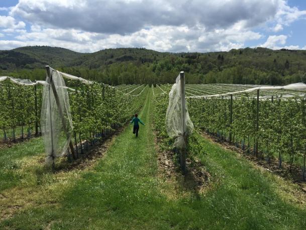 France Vineyards