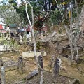 Maggie Borneo 045