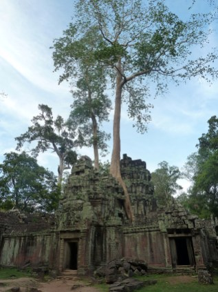 Ankor has wonderful trees