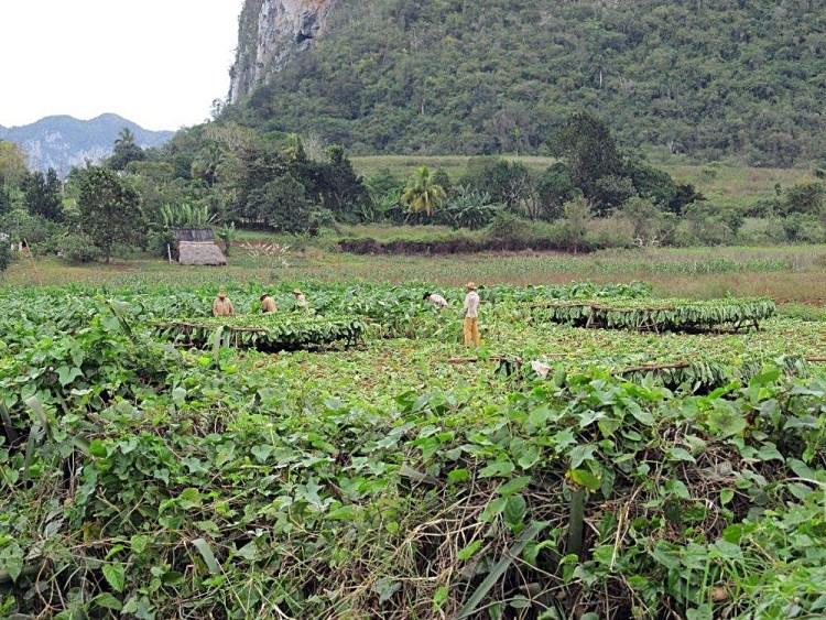 Vinales tobacco farmers, Cuba