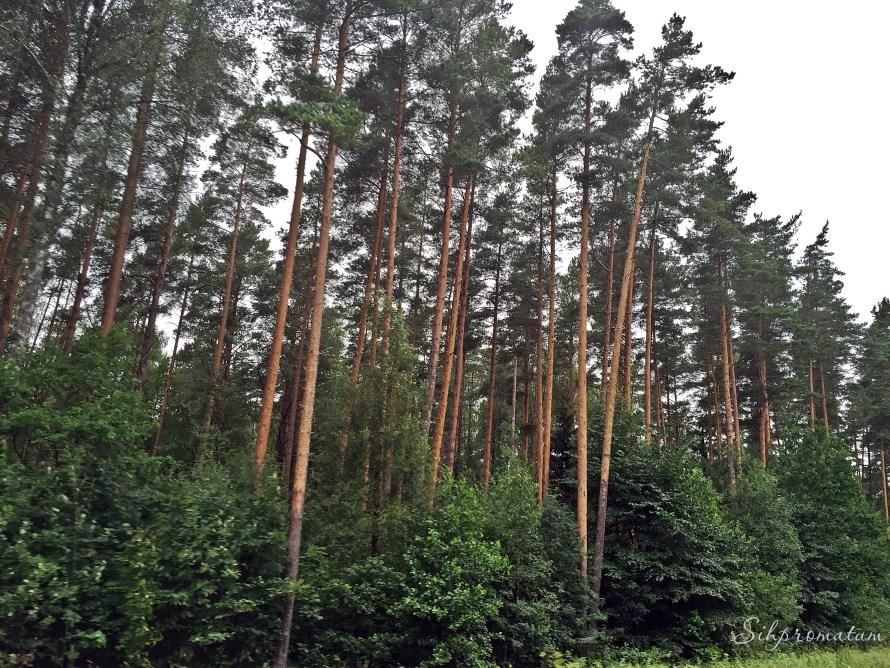 Countryside Estonia