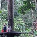 Borneo 033