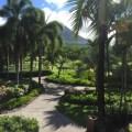 tropical-paradise-on-nevis – Copy – Copy