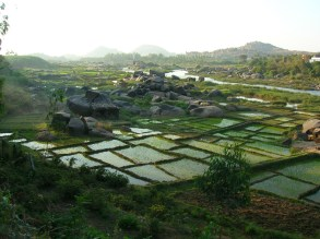 Rice fields - Hampi