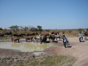 watering hole - Angola