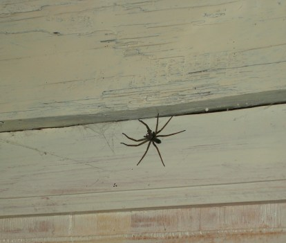 """""""A HUGE spider!"""" I choked with disgust. Leaping into the safety of the centre of the room, we yelled for Mom as we huddled together, pointing the light in every direction to avoid a sneak attack."""