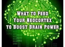what to feed your neocortex to boost brain power