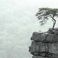 Kırın Tepesindeki Ağaca Övgü