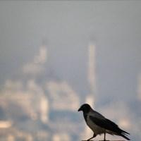 Kuş Koysunlar Yoluna