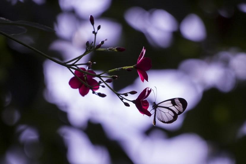 Accepter sa fragilité - Laisser parler sa vulnérabilité