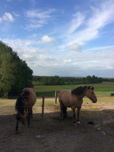 Équithérapie : prendre soin de soi avec le cheval