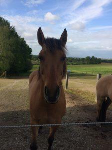 Équithérapie : la rencontre avec le cheval