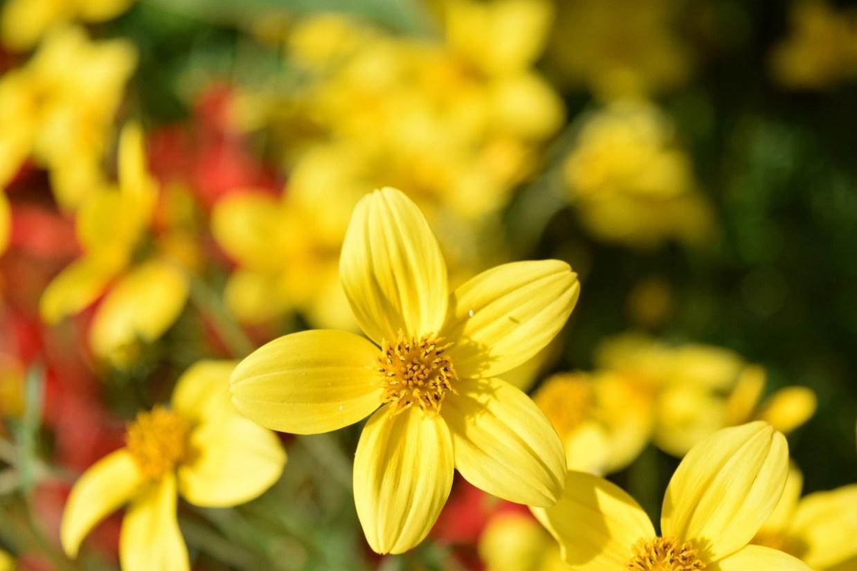 5枚の花びら