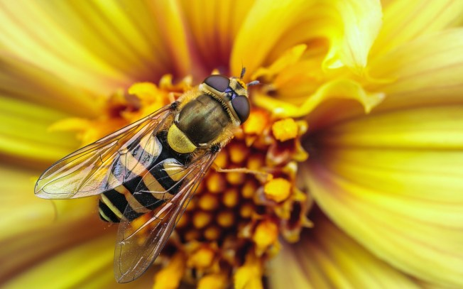 6998424-wasp-insect-flower-yellow