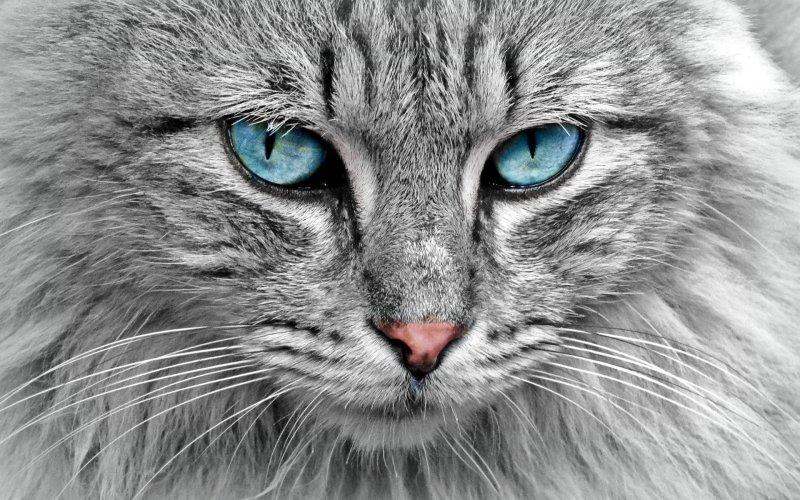 Relaxujte s Túlavou mačkou. Bavte sa, ak to dokážete.