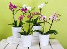 Jak dbać o kwiaty w domu