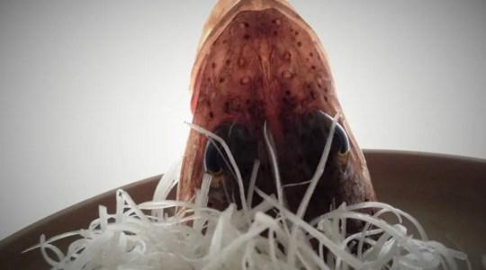 ネズミゴチ
