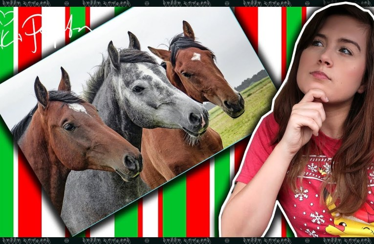 Vlogmas Day 7: I Once Wanted To Be A Horse
