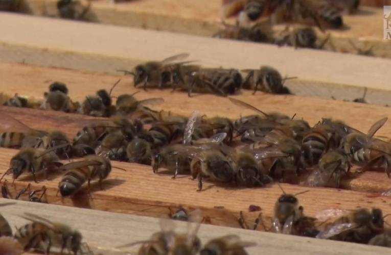 RIT Beekepers Club Helps Protect Honey Bees
