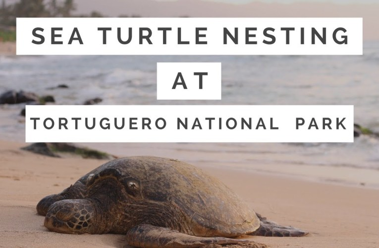 Sea Turtle Nesting Season