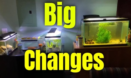 Some Crazy big changes for all my fish tanks!