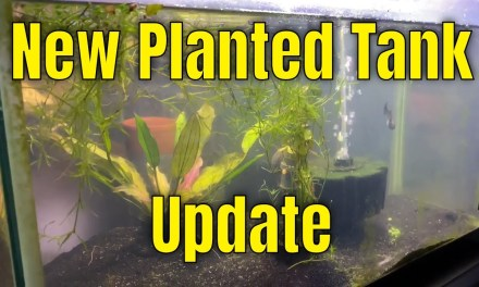 New Planted 10 Gallon Update & I want your questions!