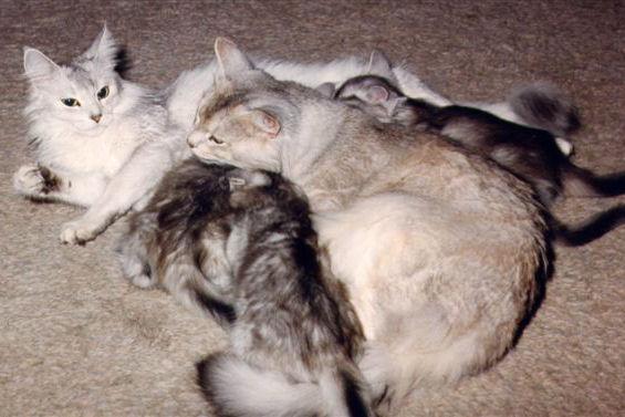 Kobus en Elvira
