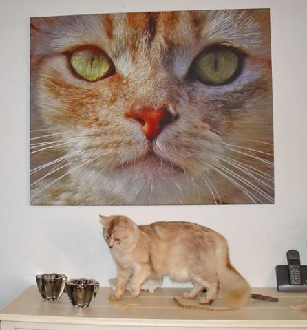 Hugo en Kristl hebben een vriend die foto's kan uitvergroten op canvas. Prachtig.
