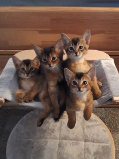 20-09-12 X-nest compleet in kittenboom. Simba, Sheralyn, Xera en Chumba vooraan