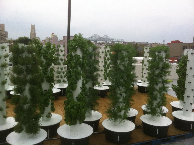 Sustainable Aeroponic Rooftop Garden Created Above Downtown Rouses