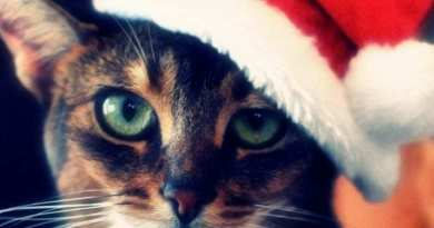 The Alternative Christmas Quiz 2016 – how much do you really know about Xmas?